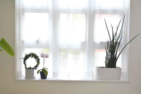 北欧インテリアにぴったりな観葉植物おすすめランキングベスト3